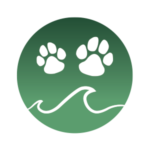 Beach City Dog Camp